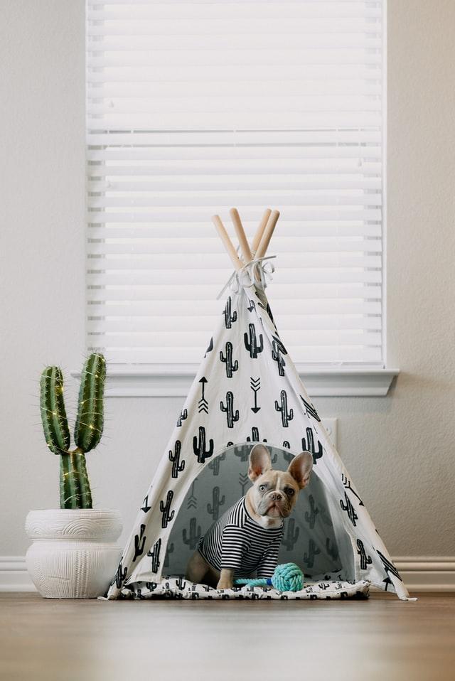 התאמת חלל הבית לגור כלבים קטן